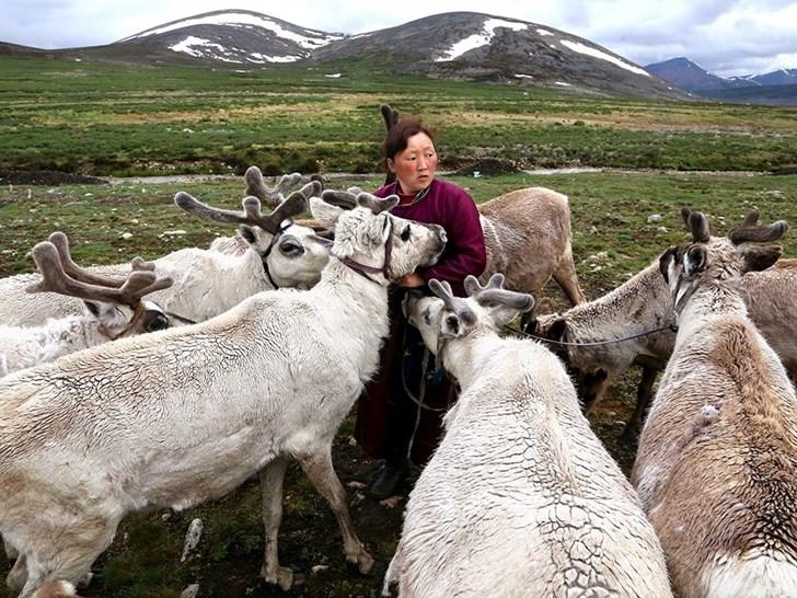 Người chăn tuần lộc, Mông Cổ