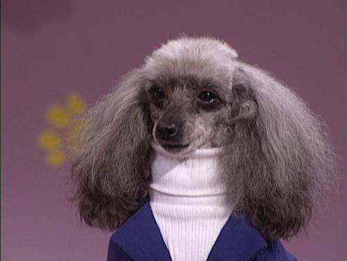 Những chú chó khiến bạn không thể nhịn cười - Hình 19