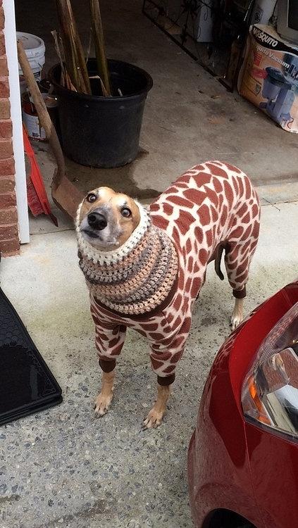 Những chú chó khiến bạn không thể nhịn cười - Hình 11