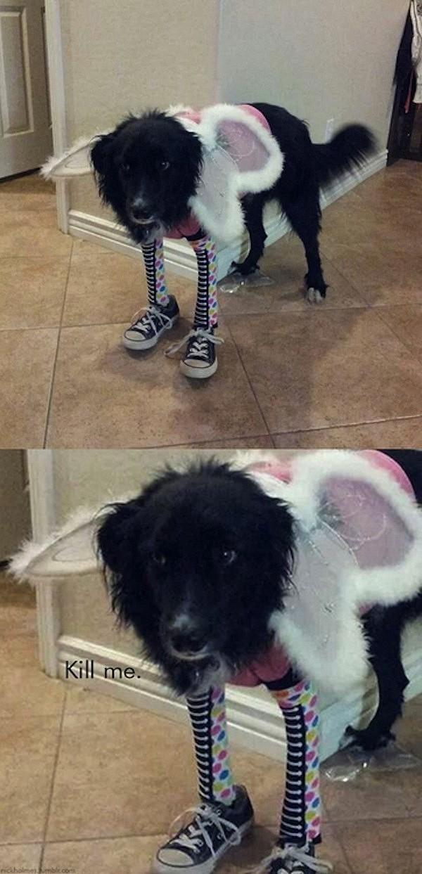 Những chú chó khiến bạn không thể nhịn cười - Hình 2