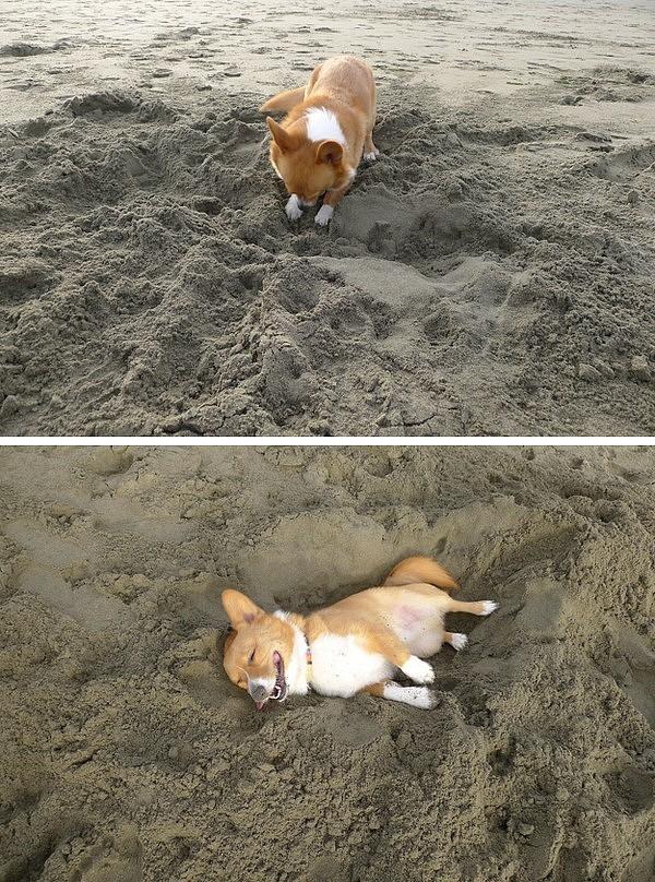 Những chú chó khiến bạn không thể nhịn cười - Hình 17