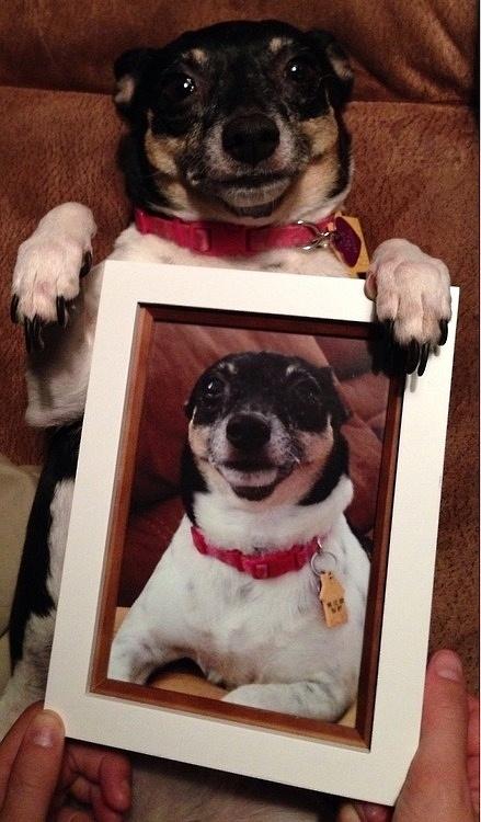 Những chú chó khiến bạn không thể nhịn cười - Hình 27