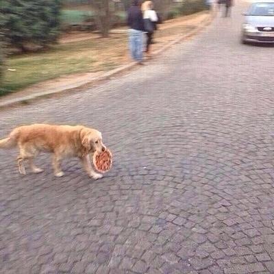 Những chú chó khiến bạn không thể nhịn cười - Hình 12