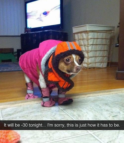 Những chú chó khiến bạn không thể nhịn cười - Hình 21