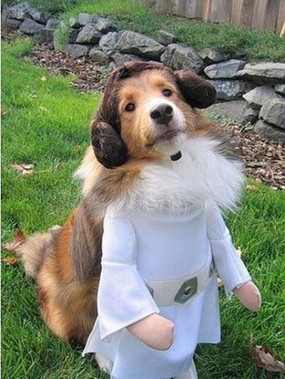 Những chú chó khiến bạn không thể nhịn cười - Hình 29