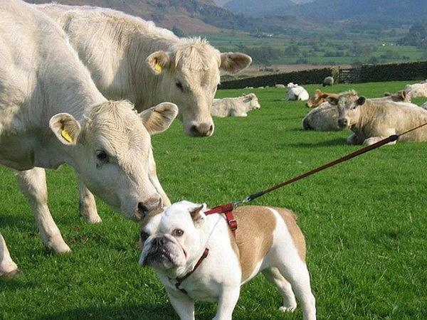 Những chú chó khiến bạn không thể nhịn cười - Hình 5