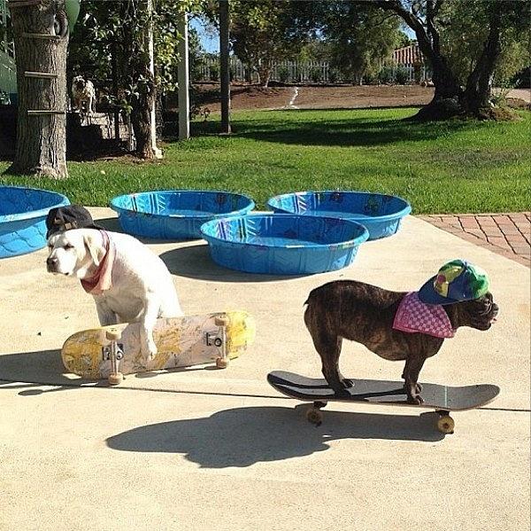 Những chú chó khiến bạn không thể nhịn cười - Hình 25