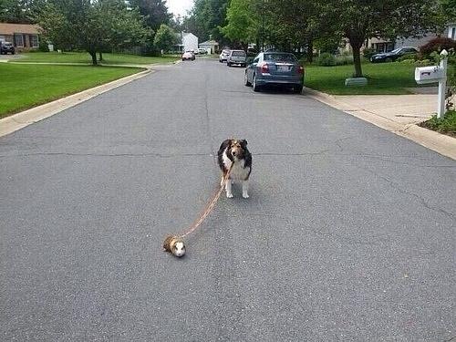 Những chú chó khiến bạn không thể nhịn cười - Hình 23