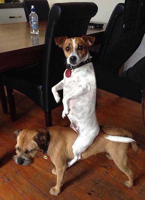 Những chú chó khiến bạn không thể nhịn cười - Hình 10