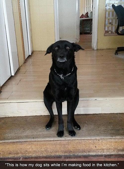 Những chú chó khiến bạn không thể nhịn cười - Hình 18