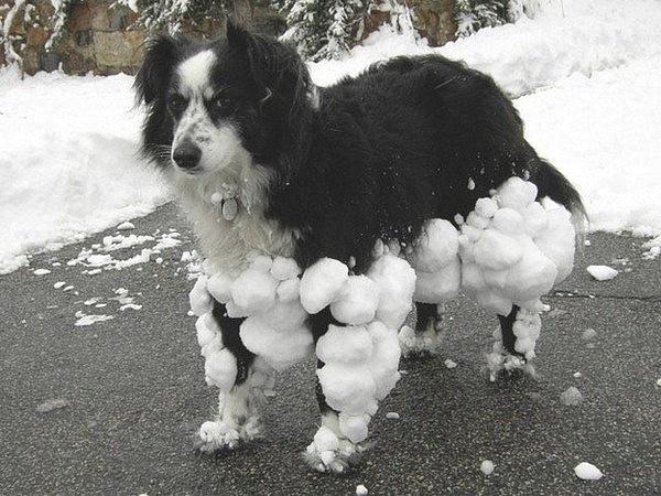 Những chú chó khiến bạn không thể nhịn cười - Hình 1