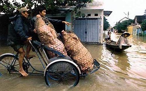 Các kiểu xe cộ siêu hài chỉ có ở Việt Nam - Hình 7
