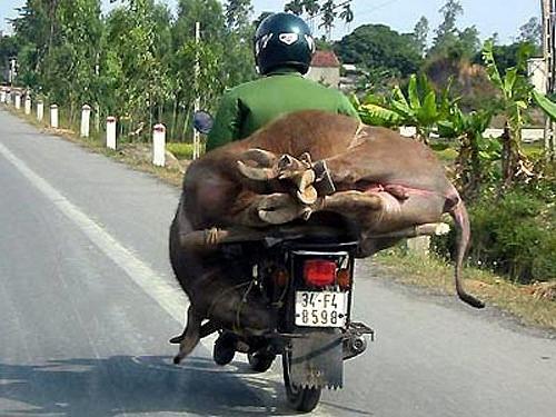 Các kiểu xe cộ siêu hài chỉ có ở Việt Nam - Hình 8