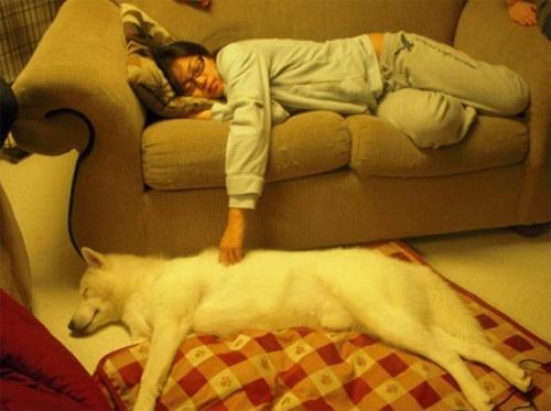 Những cặp chủ nhân và thú nuôi cực giống nhau - Hình 8