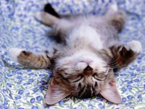 Những chú mèo con siêu dễ thương - Hình 8