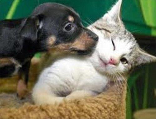 Những chú mèo con siêu dễ thương - Hình 3