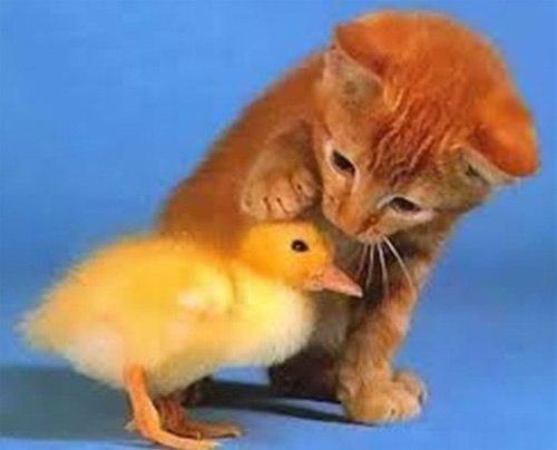 Những chú mèo con siêu dễ thương - Hình 6