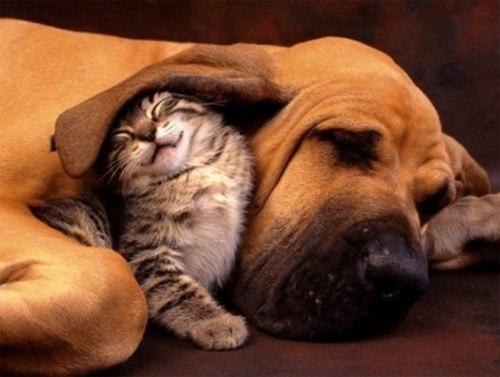 Những chú mèo con siêu dễ thương - Hình 4