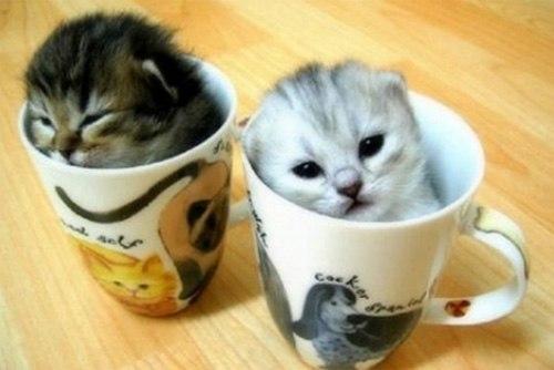 Những chú mèo con siêu dễ thương - Hình 5