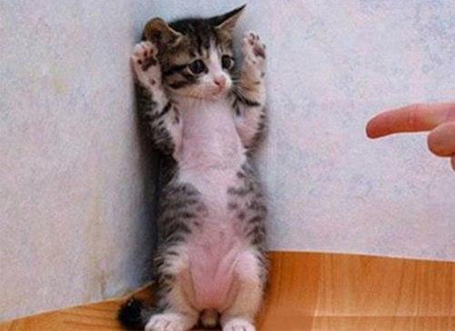 Những chú mèo con siêu dễ thương - Hình 9