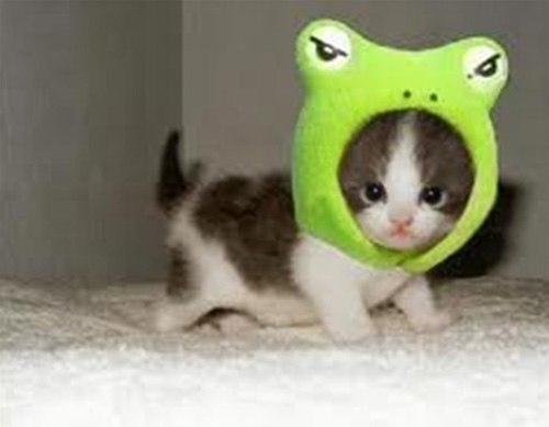 Những chú mèo con siêu dễ thương - Hình 11