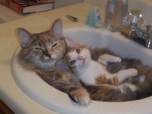 Những chú mèo con siêu dễ thương - Hình 10