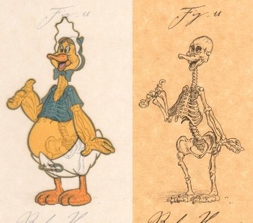 Giải phẫu học nhân vật hoạt hình - Hình 15