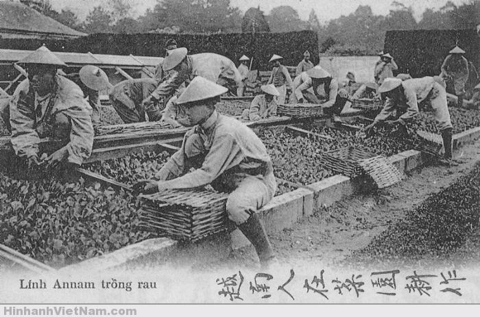 Lính Việt trồng rau trong vườn của điện Versailles