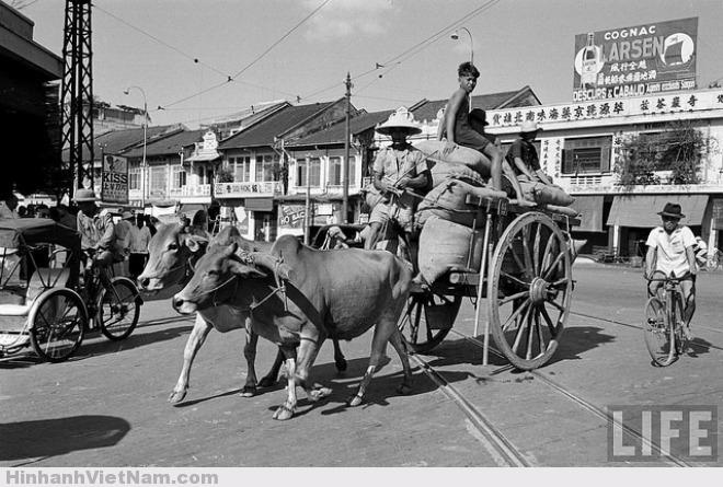Chiếc xe bò chở hàng tại góc đường Khổng Tử – Tổng Đốc Phương, nay là ngã tư Hải Thượng Lãn Ông – Châu Văn Liêm, ảnh chụp năm 1950 đăng trên tạp chí Life.